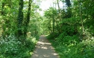 Walking in to Wanstead Park Fairies Hill April 2011