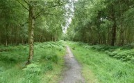 The Essey Way path through Gernon Bushes Nature Reserve Theydon Bois Walking Route