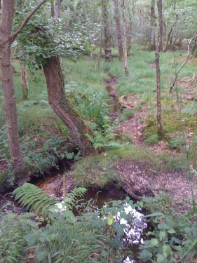 New Forest Ancient Woodland Hampshire