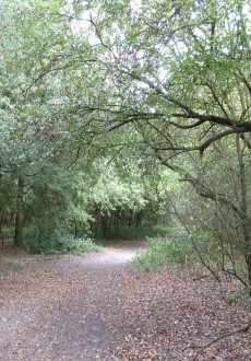 Three Forests Way in Hainault Forest - WalksAndWalking Essex Walks