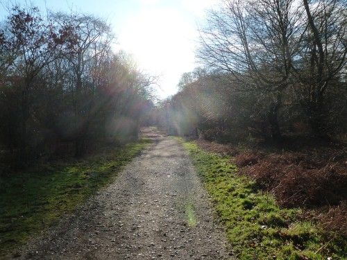 Essex Walks - Epping Forest - Green Ride
