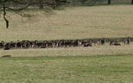 Walks And Walking - Essex Walks Epping Forest Deer Sanctuary Walking Route - The Deers!
