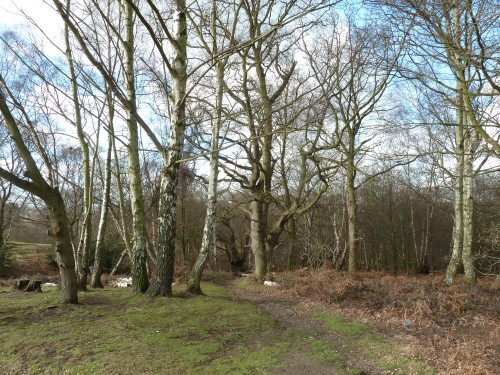 Walks And Walking - Essex Walks - Epping Forest - High Beach