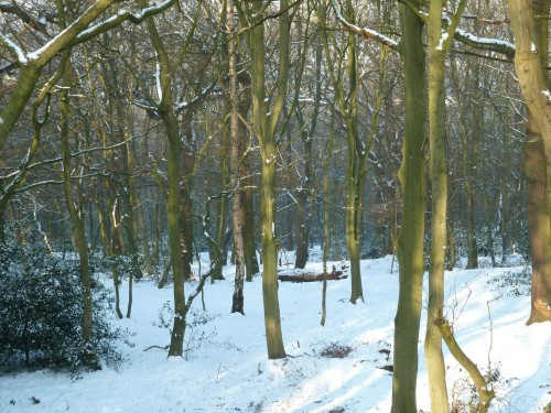 Walks And Walking - Essex Walks Epping Forest Pole Hill Obelisk Walking Route - The Hawk Wood