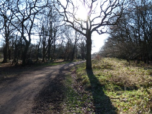 Walks And Walking - Essex Walks Epping Forest Queen Elizabeth's Hunting Lodge Walking Route - Centenary Walk
