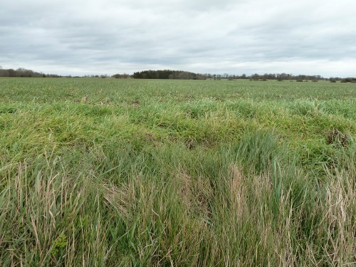 Walks And Walking - Essex Walks Moreton Walking Route - Open Farmland