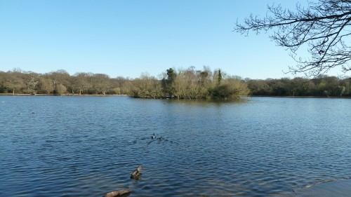 Walks And Walking - Essex Walks Epping Forest Favourite Family Walking Route - Connaught Water