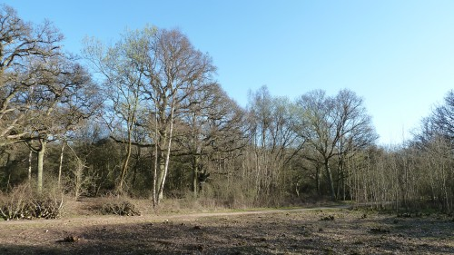 Walks And Walking - Essex Walks Epping Forest Favourite Family Walking Route - Coppicing Trees