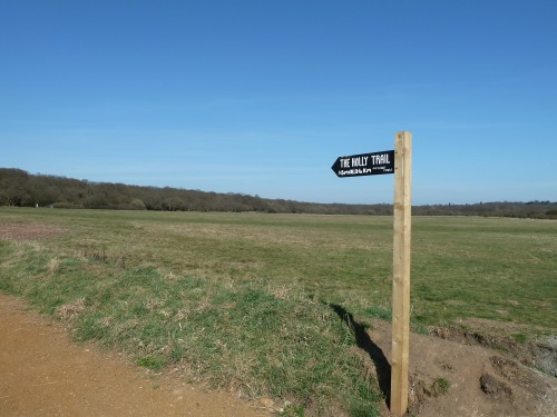 Walks And Walking - Essex Walks Epping Forest Favourite Family Walking Route - Start of The Holly Trail