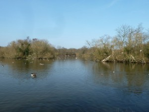 Walks And Walking - Essex Walks Epping Forest Willow Trail Walking Route - Connaught Water