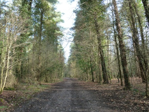 Walks And Walking - West Sussex Walks Slindon Estate National Trust Walking Route - Tree Lined Track