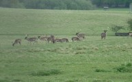 Walks And Walking - Essex Walks Epping Forest Jacks Hill Walking Route - Bucks At The Deer Sanctuary