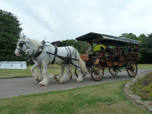 Hertfordshire Heavy Horse Show June 2011 at Capel Manor College Shire Horses Dray Ride