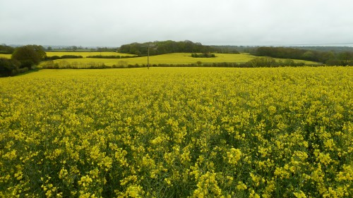Walks And Walking - East Sussex Walks - Kent Walks - 1066 Country Walk - Walking Route - Rape Fields