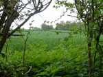 Walks And Walking - Hertfordshire Walks Forty Hall Enfield Walking Route - Chain Walk