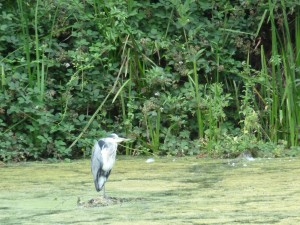 Walks And Walking – Epping Forest The Chestnut Trail Walking Route 1st Heron