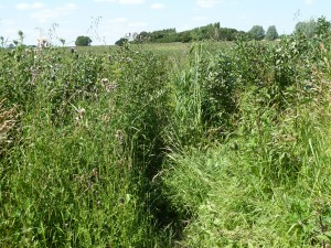 Walks And Walking - Essex Walks Epping Forest District Walking Route - Overgrown Field Testing Avon Skin So Soft Bug Guard