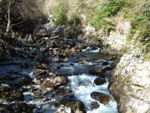 Walks And Walking - Wales Walks Coed y Brenin Forest Park - Looking back from the footbridge