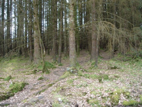 Walks And Walking - Wales Walks Coed y Brenin Forest Park - Unpenetrable pine forest