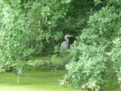 Walks And Walking  Epping Forest The Chestnut Trail Walking Route 2nd Heron