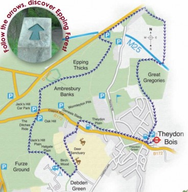Walks And Walking - Essex Walks The Oak Trail Epping Forest Walking Route