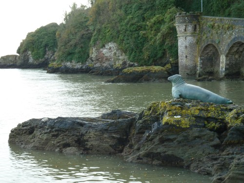 Walks And Walking - Cornwall Walks Looe to Polperro Walking Route - Nelson the Looe sea lion