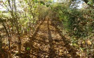 Walks And Walking - Suffolk Walks Stoke by Nayland Arger Fen Walking Route - Autumn Lined Path