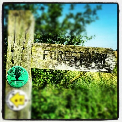 The Forest Way Walk Epping Forest