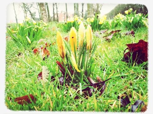 Spring Walks - Walks And Walking