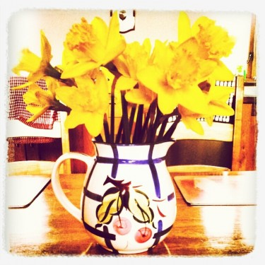 Walks And Walking - Spring Walks Best For Daffodils - On Your Kitchen Table