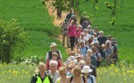 Walks And Walking - Lincolnshire Wolds Walking Festival 2011