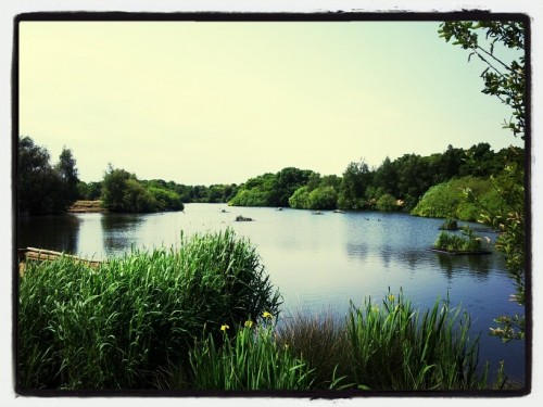 Walks And Walking - Epping Forest Hornbeam Trail - Hollow Ponds