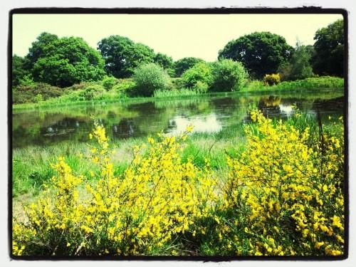 Walks And Walking - Epping Forest Hornbeam Trail - Hollow Ponds Snaresbrook