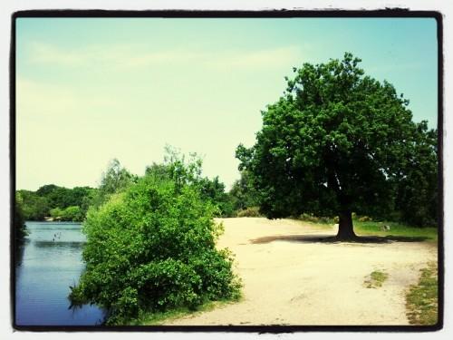 Walks And Walking - Epping Forest Hornbeam Trail - Hollow Ponds Walks