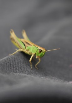 Cricket on my walking trousers using the Canon EOS 100D Camera Epping Forest