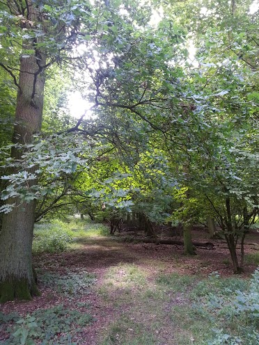 Walks And Walking - Epping Forest Cobbins Brook Walking Route - Cobbins Brook Area