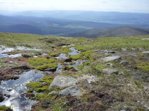 Scotland Walks - A Midsummer Walk Up Carn Ban Mor In The Cairngorms - JWoolf Carn Ban Mor 5