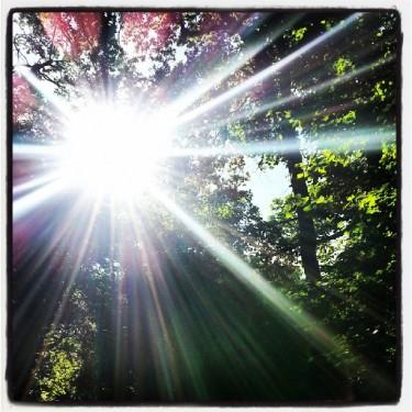 Walks And Walking - Hertfordshire Walks Hatfield Forest Walks - Sunlight