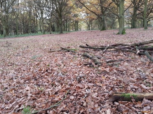 Walks And Walking - Essex Walks Epping Forest Warlies Walking Route - Autumn Leaves