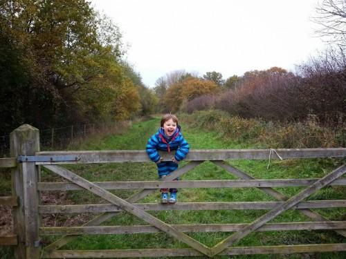 Walks And Walking - Essex Walks Epping Forest Warlies Walking Route - Tedi