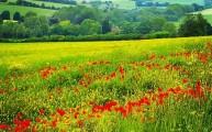Walks And Walking - Elham Walk in Canterbury Kent - Poppy Field
