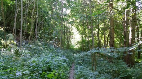 nature walk essay