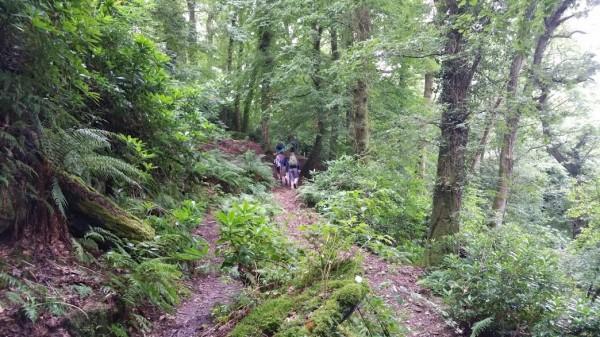 HF Holidays 11 Mile Linear Hard Walk to Dunkery Beacon - Drapers Way