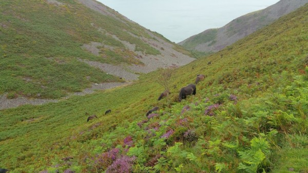 HF Holidays 8 Mile Linear Hard Walk to Lynmouth - South West Coast Path - Exmoor Wild Ponies