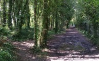 Walks And Walking - Port Lympne Walk In Kent - Royal Military Canal Path