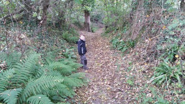 HF Holidays Guided Walk – Godshill Circular Walking Route - St Martin's Down Wood